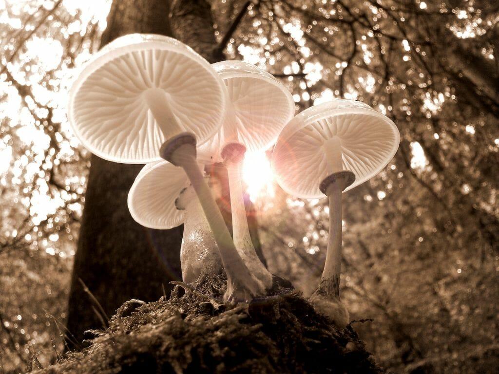 I funghi: benefici per la salute